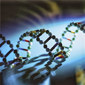 What is the BRCA2 gene?