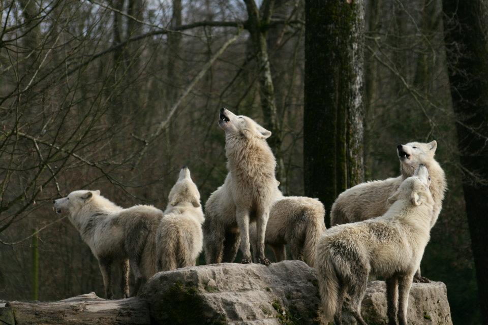 Animales, todas las especies 403026_286421241419353_14158462_n