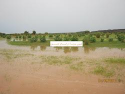 مناظر من الحوض الغربي