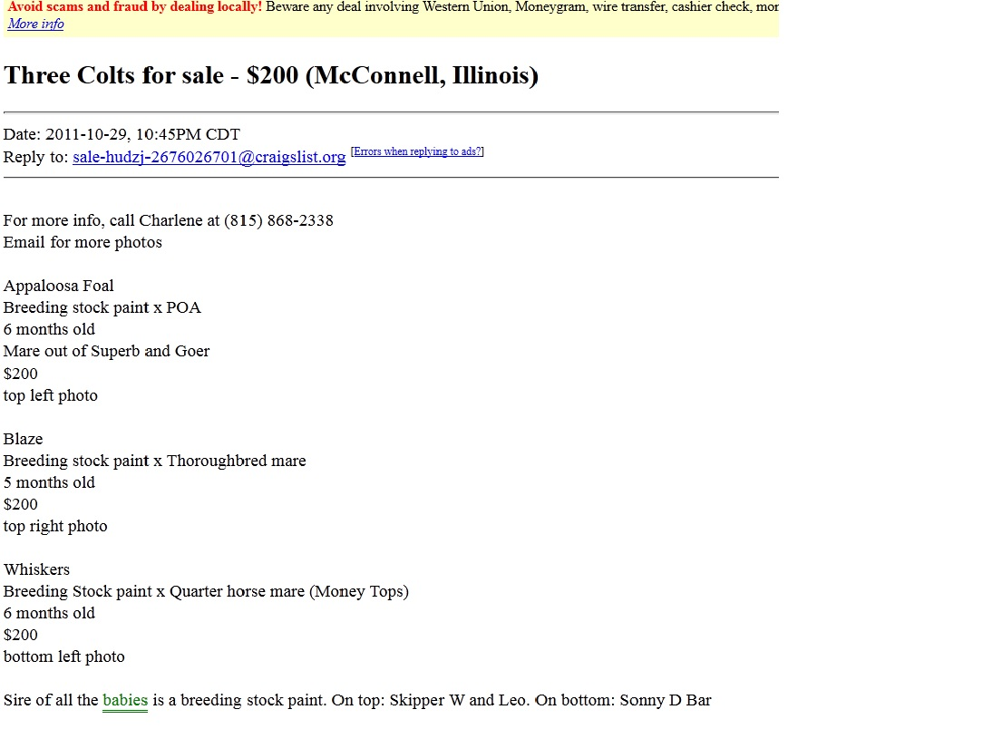north horse backyard horse breeders a craigslist example