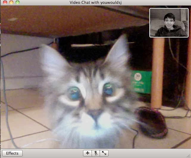 Cat recognized her owner on video chat (4 pics), funny cat pic, cat video chat with human