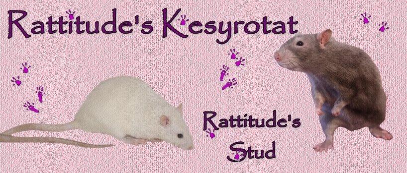 Rattitude's
