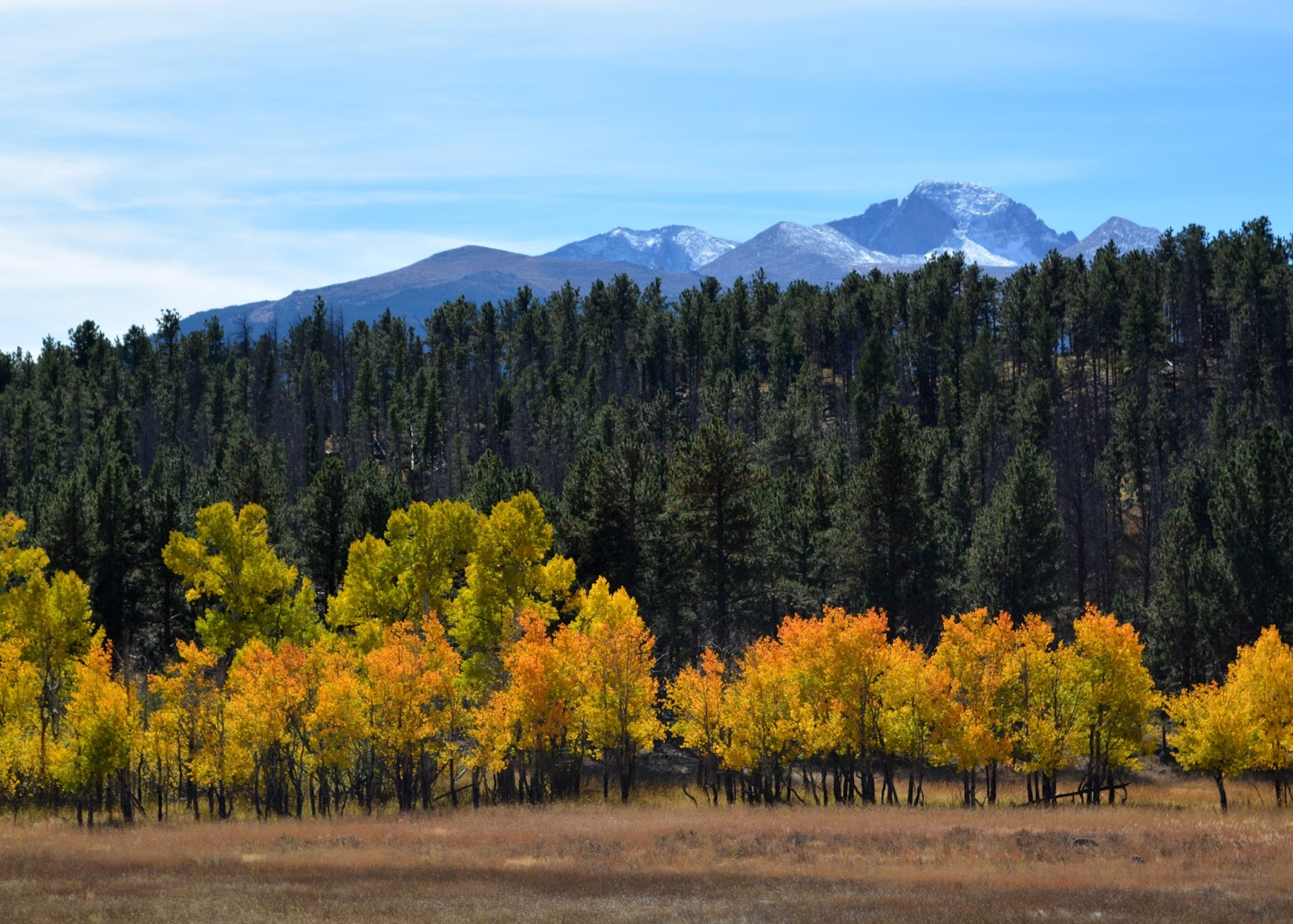 cozy birdhouse | beautiful fall foliage on the aspens at rocky mountain national park