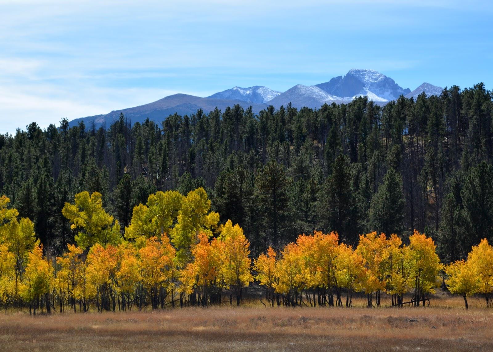 cozy birdhouse | beautiful fall foliage on the aspens at rocky mountain national park