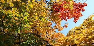 Koyou: Japanese Colorful Autumn