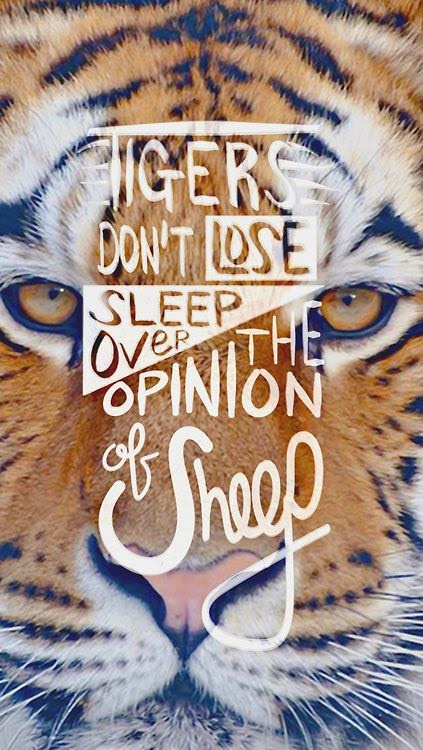 tigers don't lose sleep over the opinion of sheep