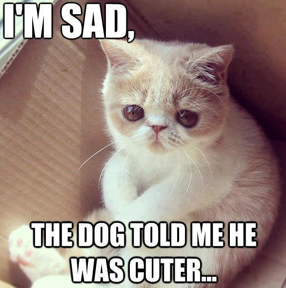 Cute kitten: I39;m sad  the dog told me he was cutter