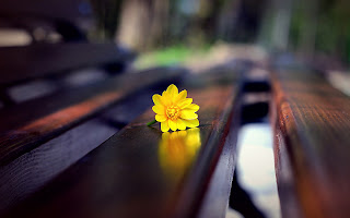 Yellow Flower on Bench Close Up Photo HD Wallpaper