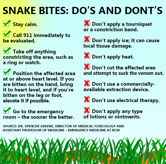 Infographic Of Snakebite Dos And Donts