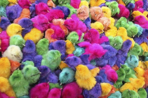 Curiosita 39 di ogni genere pulcini colorati for Regalo roba usata