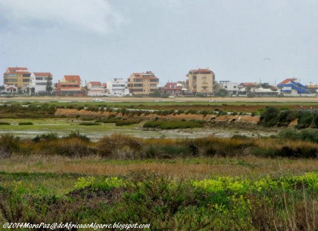 Vegetação ao longo da Ria Formosa