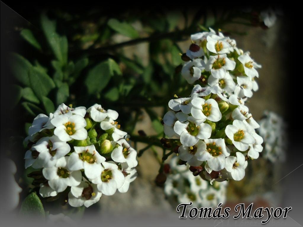Plants and Flowers, plants species: June 2012