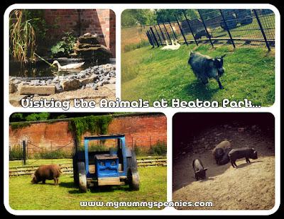 visiting the animals at Heaton Park