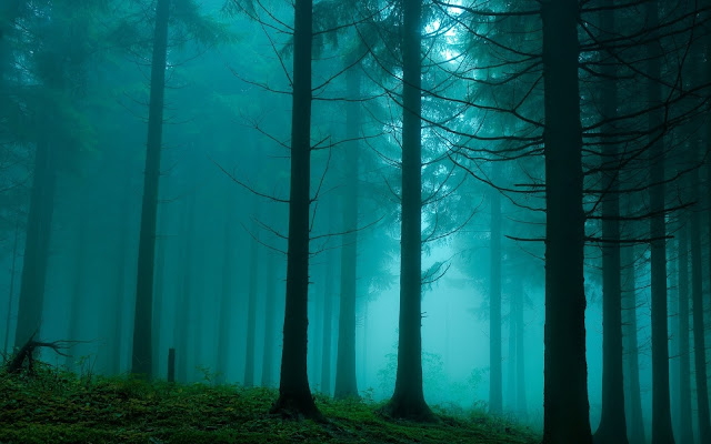 Foggy Forest Dark Grey Trees Smokes Creepy Wallpaper