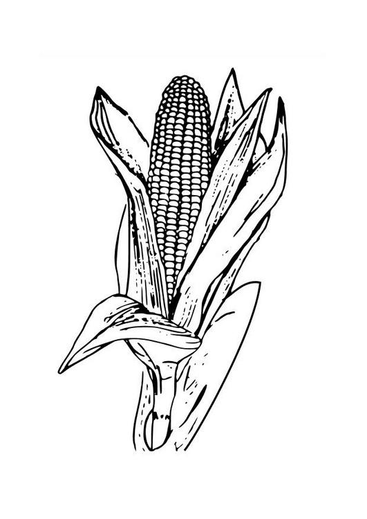 Mazorca Maiz Ingles Mazorca de Maiz Para Colorear