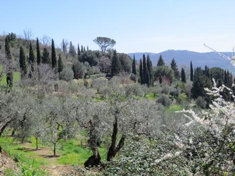 Pala Italiaa - kukkiva rinne