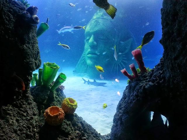 CMYK - A World Of Colour: The Manchester Sea Life Centre