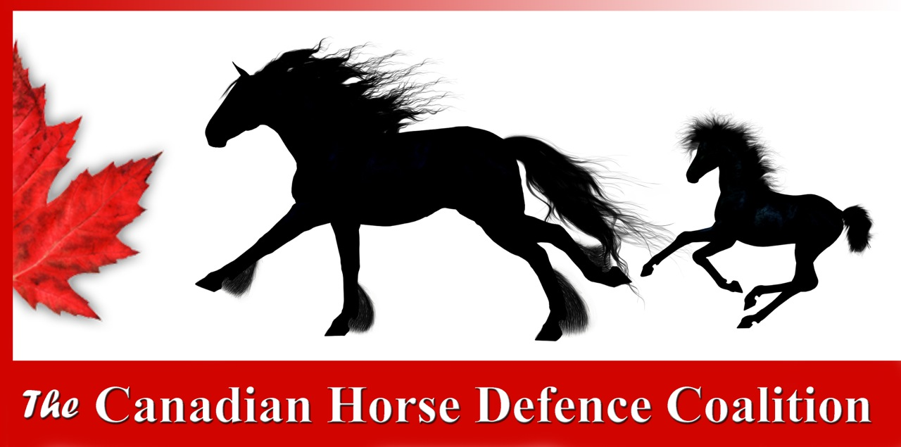 About the Canadian Horse Defence Coalition