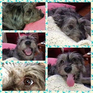 The Many Faces of Yawkey