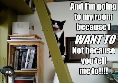 Cat says, and I'm going to my room because I want to, not because you tell me too!
