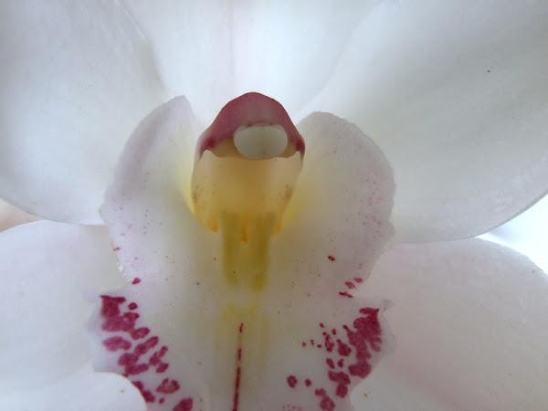 Fotografiando una orquídea