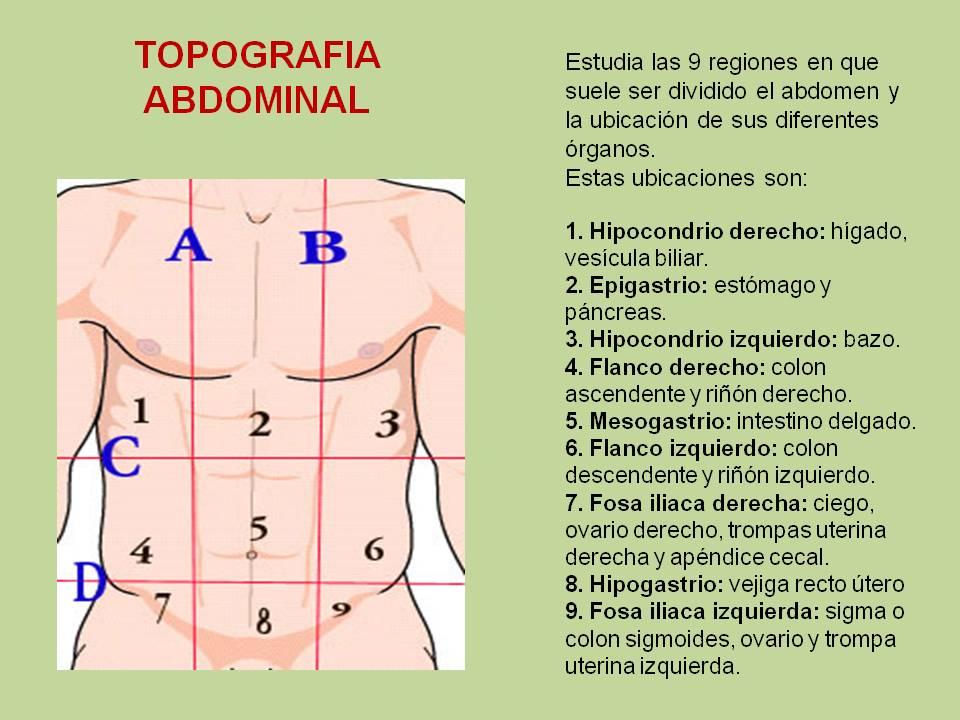 Biología didáctica: Topografía Abdominal