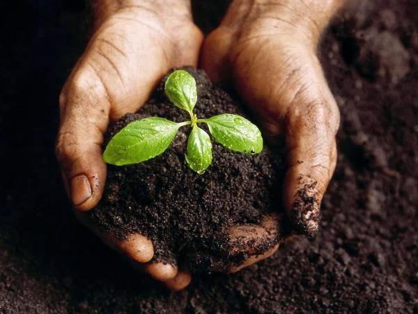 Campina Grande sedia evento que reune mais de 260 agricultores