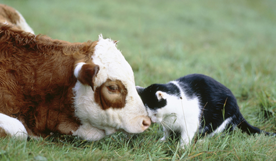 Котам нужно молоко. А у нас такой кризис в производстве