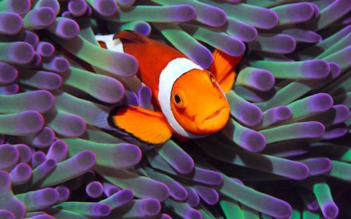 Colección de animales, peces e insectos (7 imágenes)