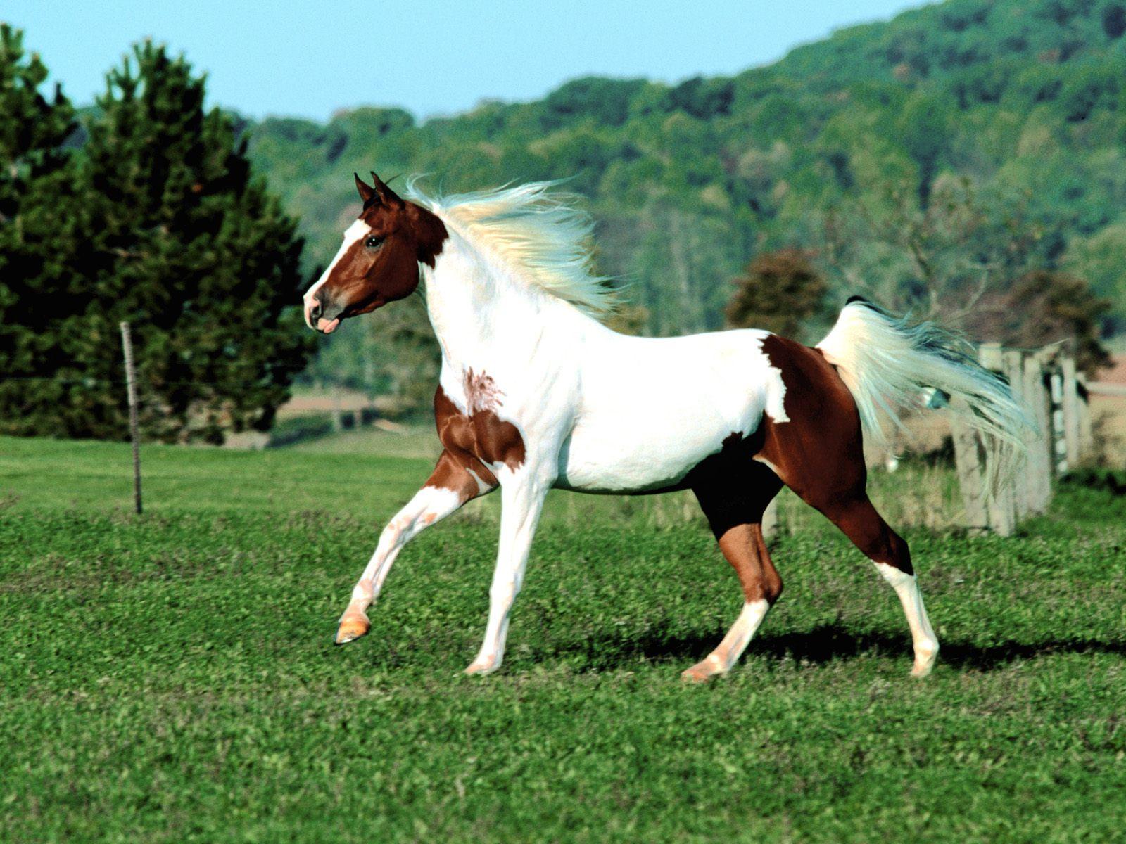 Most Inspiring   Wallpaper Horse Green - horse+wallpaper+3  Best Photo Reference_939734.jpg