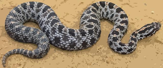 http://2.bp.blogspot.com/-5cFTJyrm3Yc/TnIBAJSVhyI/AAAAAAAAAuM/2zFGQg332gE/s1600/snake.png