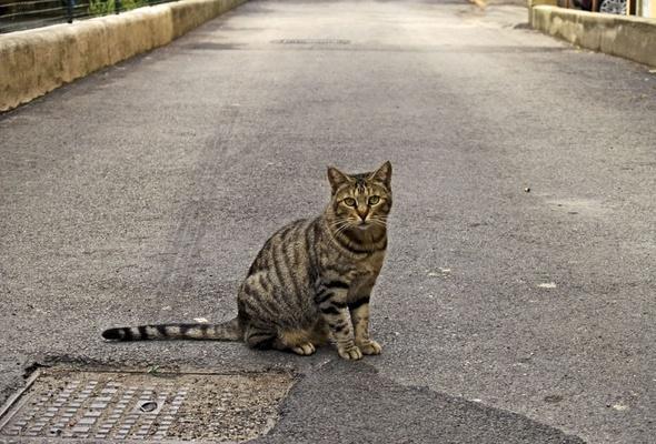 cat pictures, free cat photos