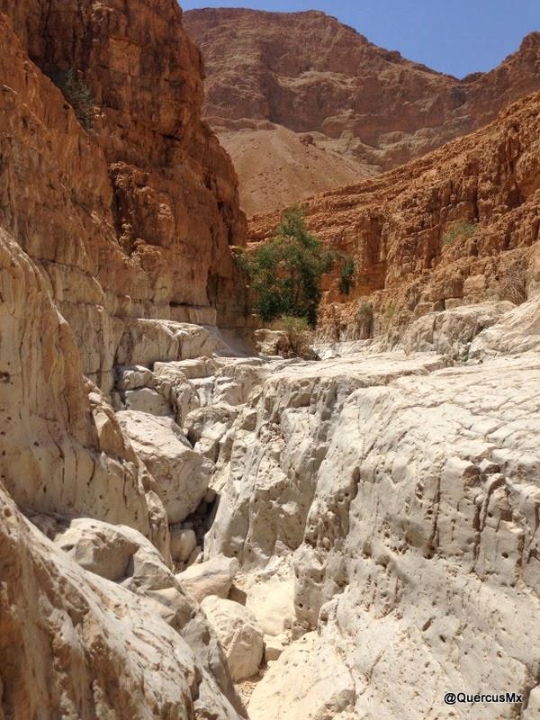 ¿Se pueden imaginar esta parte del cañón seco de Wadi David con agua?