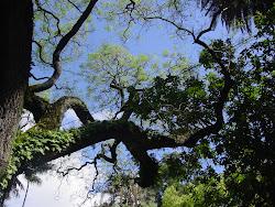 Dia 5 de Maio.. Jardim Botânico de Lisboa