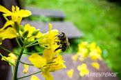 Salvemos a las abejas