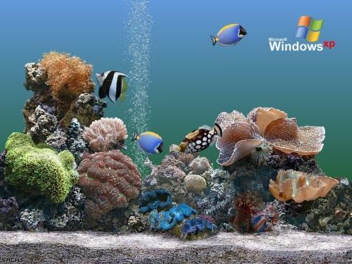 Fondos de pantallas 3D en movimiento gratis - Imagui
