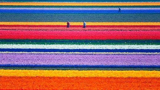 Tulip Park Kamiyubetsu, Hokkaido, Japan