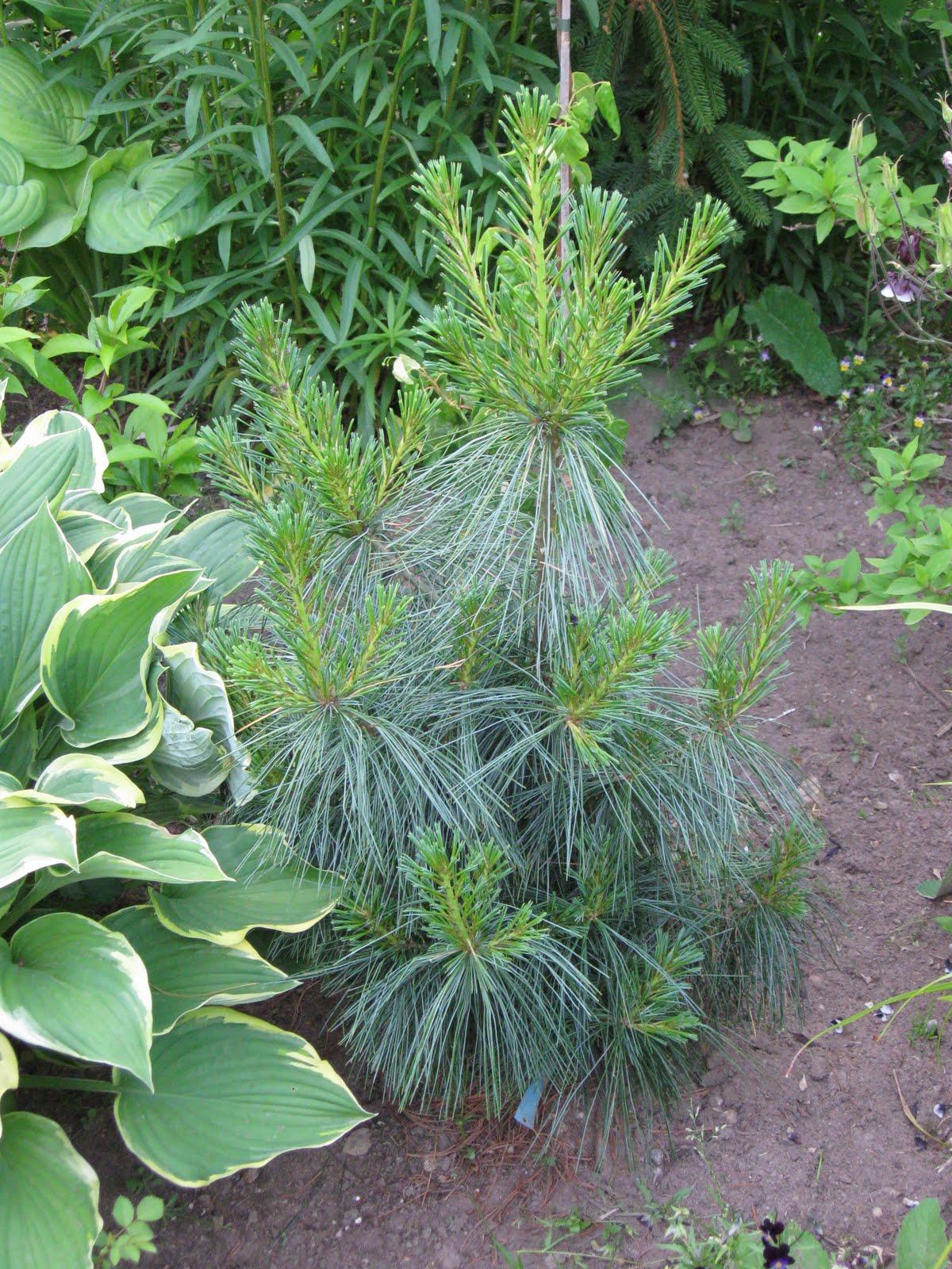 Blomsterbo: träd och buskar för den lilla trädgården