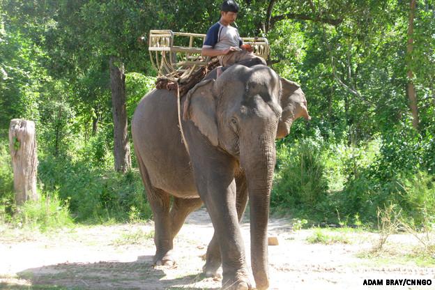 rider vs elephant