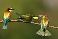 [Fabula Empresarial] Los 3 pájaros en la cerca