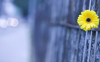 Simple Yellow Flower Blue HD Wallpaper