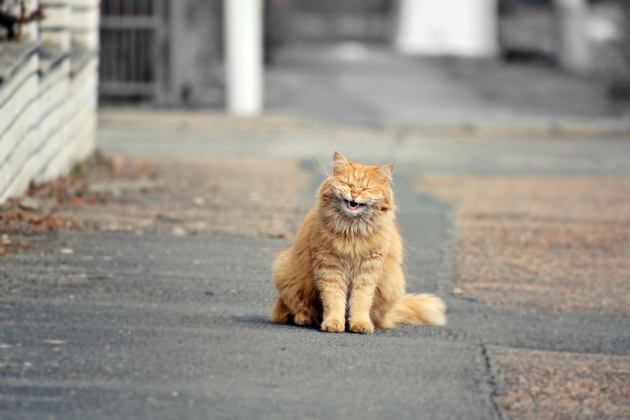 7. funny cat (garfield)  by David Charouz