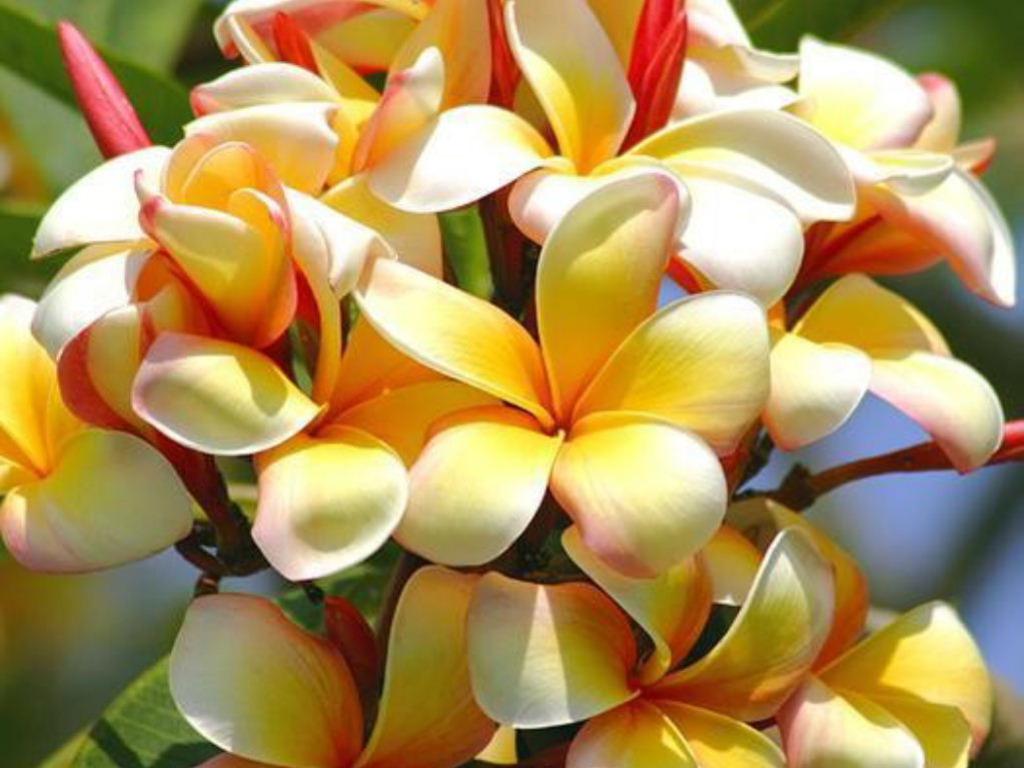 Filename Tropical Flower Wallpaper Exotic Flowers Images Jpg
