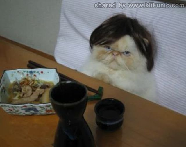 http://2.bp.blogspot.com/-5eFWeTX2Fvo/TXzG1Gub0-I/AAAAAAAARGo/2yTZhM3pvZs/s1600/these_funny_animals_635_640_39.jpg
