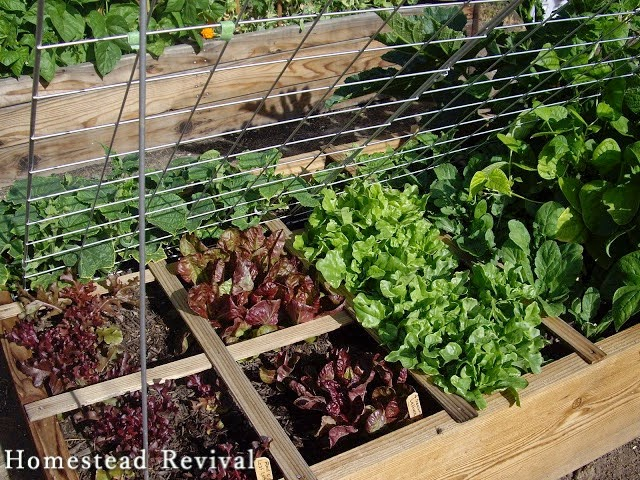 Homestead Revival Square Foot Gardening vs French Intensive