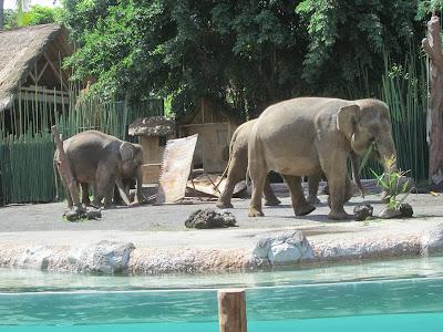 Gajah merusak lahan warga (Ilustrasi)
