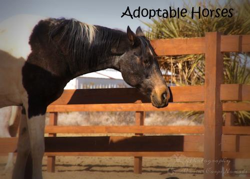 Adoptable Horses