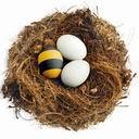 Uskrsna jaja u ptičjem gnjezdu download besplatne slike pozadine za mobitele