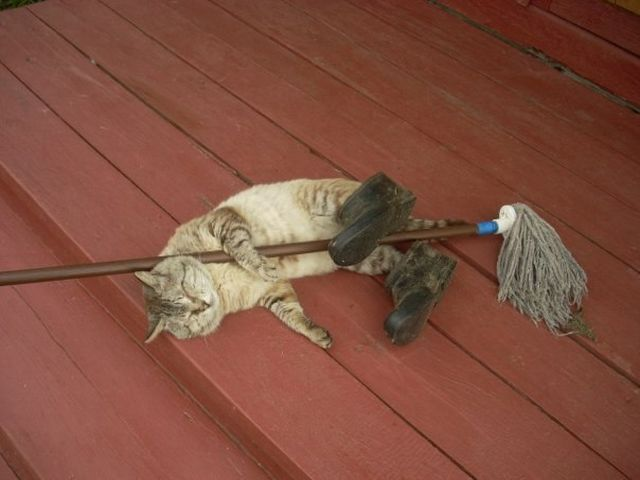 funny cat pictures, janitor cat