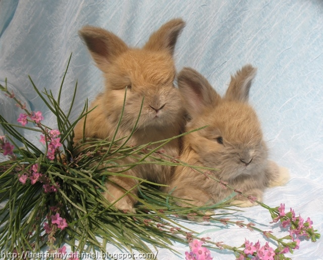 Red bunnies.
